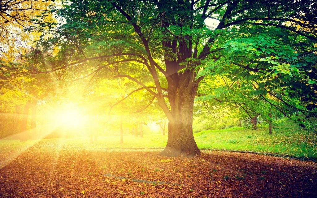 5022457-sunrise-nature-trees