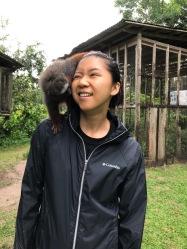 amy monkey
